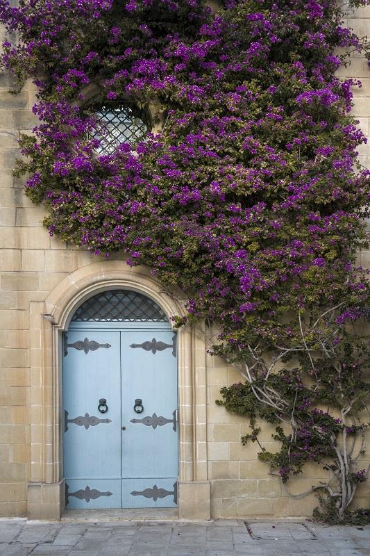 Colorful door Facade In Malta with bougainvillaeas purple flowers