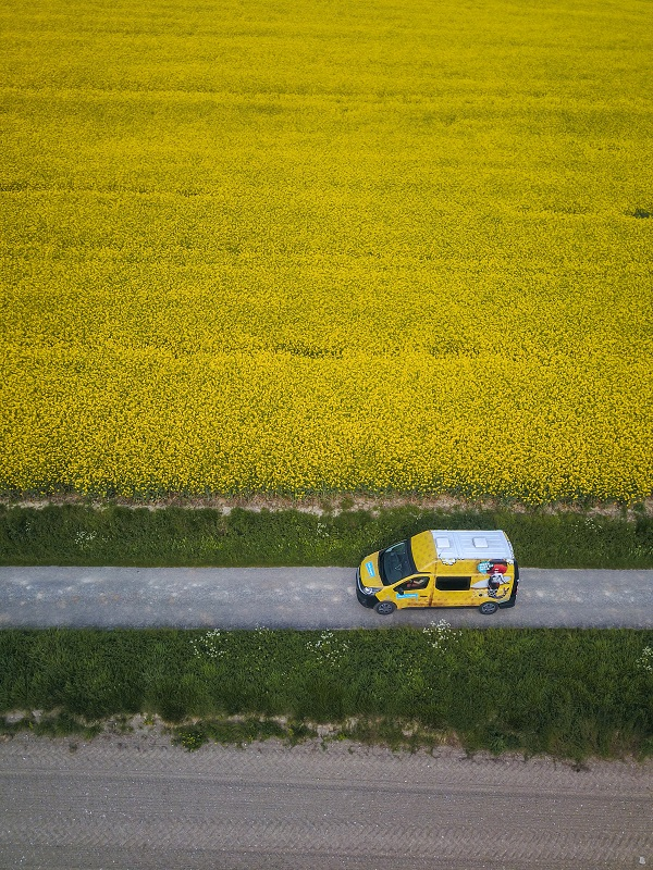 Campervan by a colorful yellow colza field
